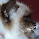 Lolita 7 mois