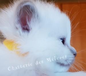 fille1mois(1)